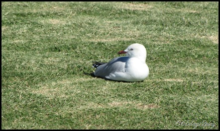Seagull basking in the sun