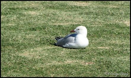 Seagull basking in the sun