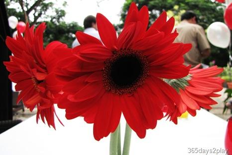 Rochester Park Cafe Flower