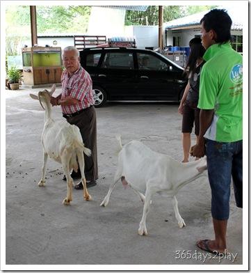 LA Goat Farm (5)