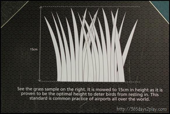 Changi Airport (7)