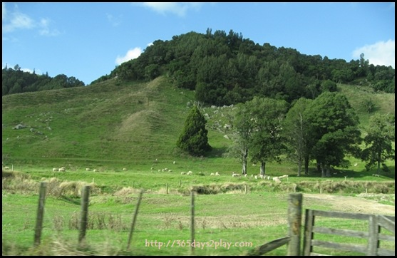 New Zealand North Island Countryside