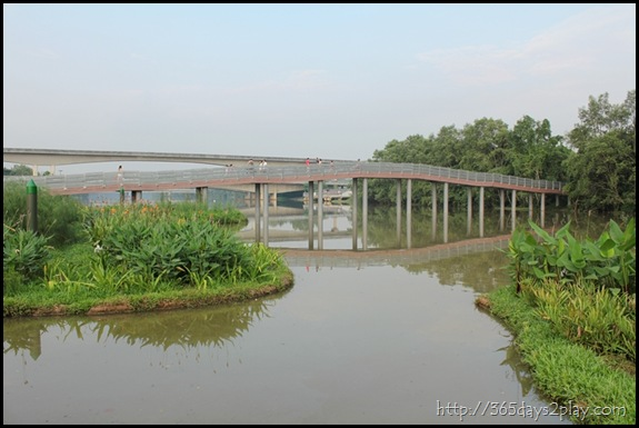 Sengkang Floating wetland (10)