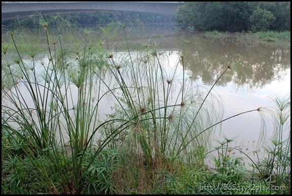 Sengkang Floating wetland (4)