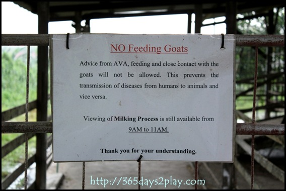 AVA says NO caressing the goats!