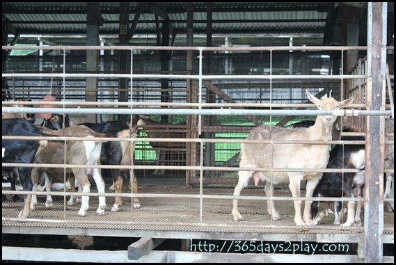 Hay Dairies (3)
