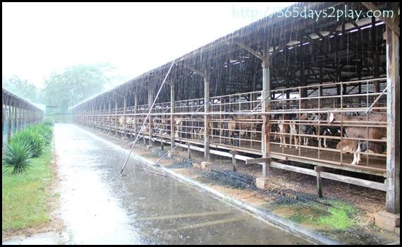 Hay Dairies (9)