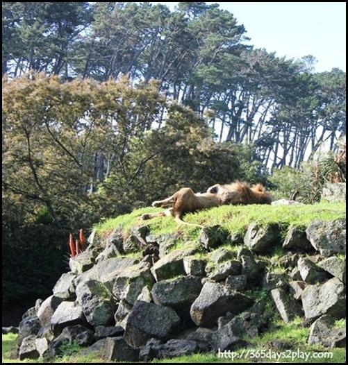 Auckland Zoo (15)
