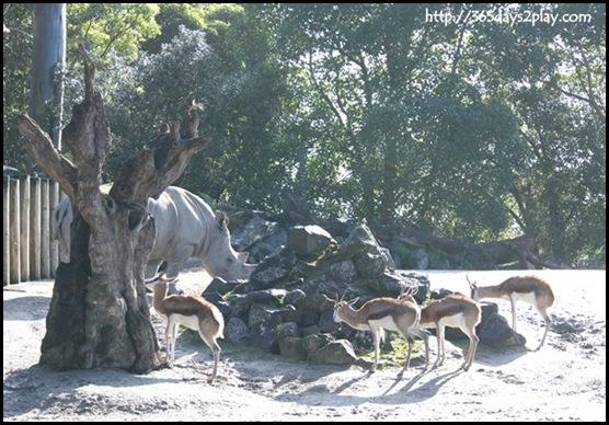 Auckland Zoo (16)