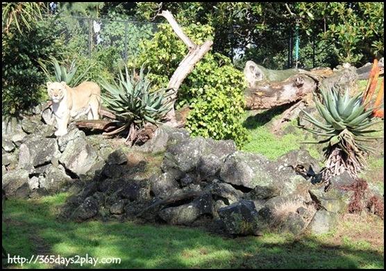 Auckland Zoo (19)