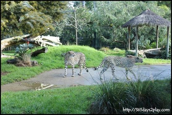 Auckland Zoo (26)
