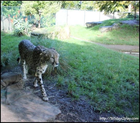 Auckland Zoo (27)
