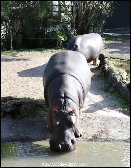 Auckland Zoo (29)