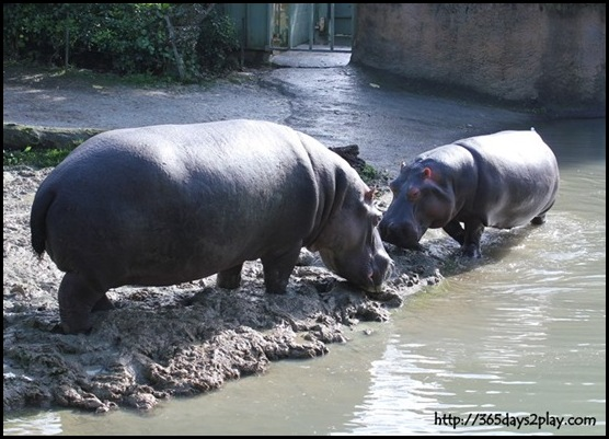 Auckland Zoo (32)