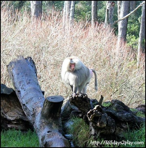 Auckland Zoo (34)