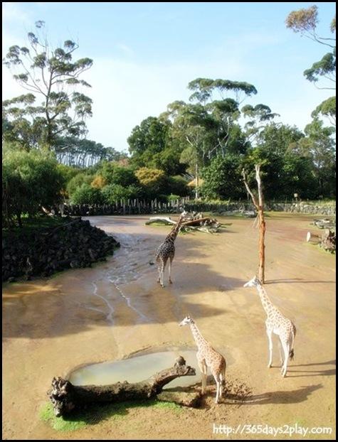 Auckland Zoo (3)