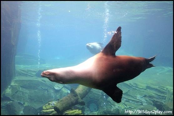 Auckland Zoo (62)