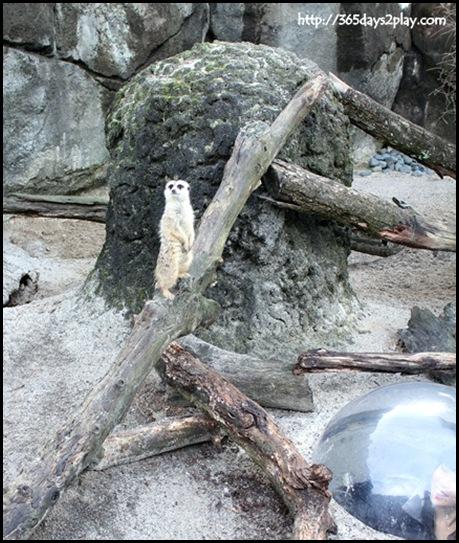 Auckland Zoo (64)