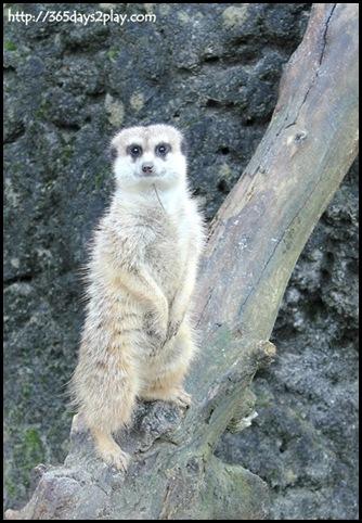 Auckland Zoo (65)