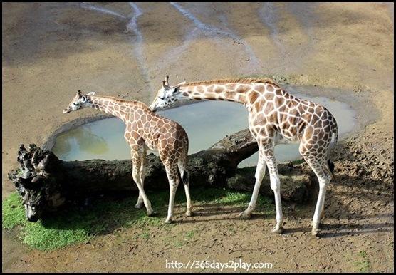 Auckland Zoo (7)