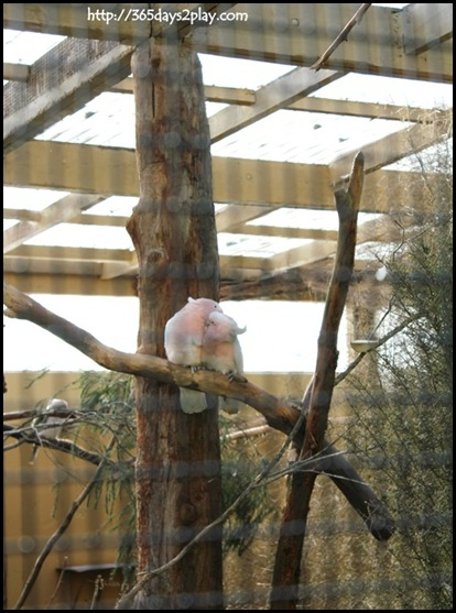 Auckland Zoo (88)