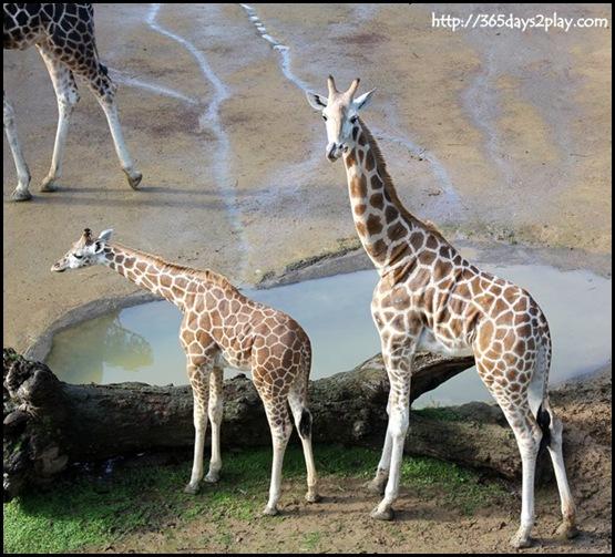 Auckland Zoo (8)