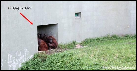 Auckland Zoo (93)