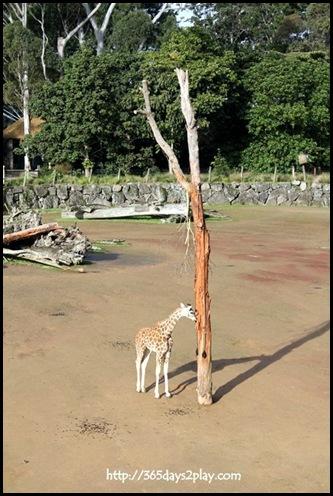 Auckland Zoo (98)