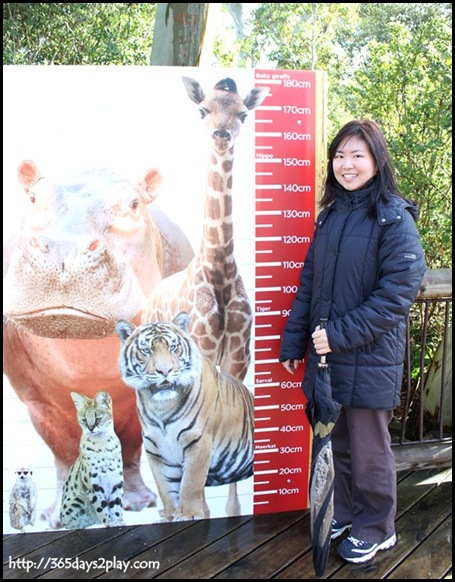 Auckland zoo (6)