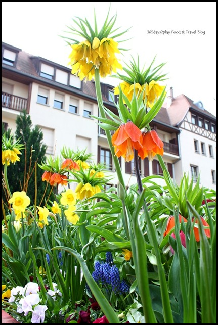 Obernai in Alsace France (14)