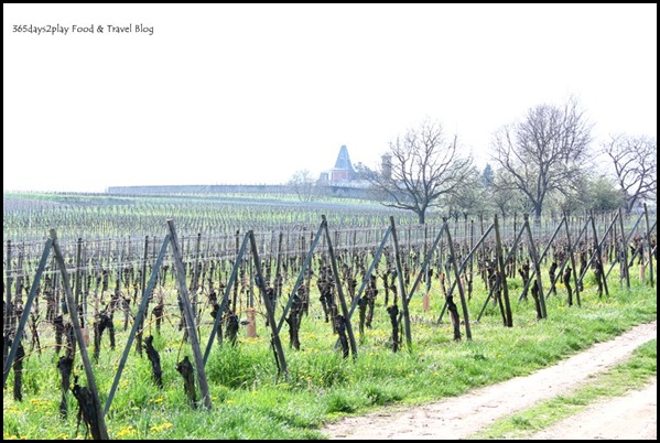 Cycling around Chateau d'Isenbourg (12)