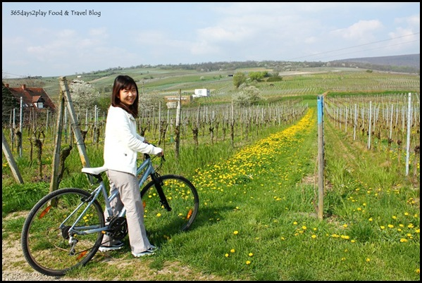 Cycling around Chateau d'Isenbourg (2)