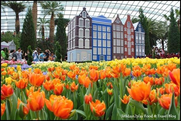Tulip Mania 2014 (23)