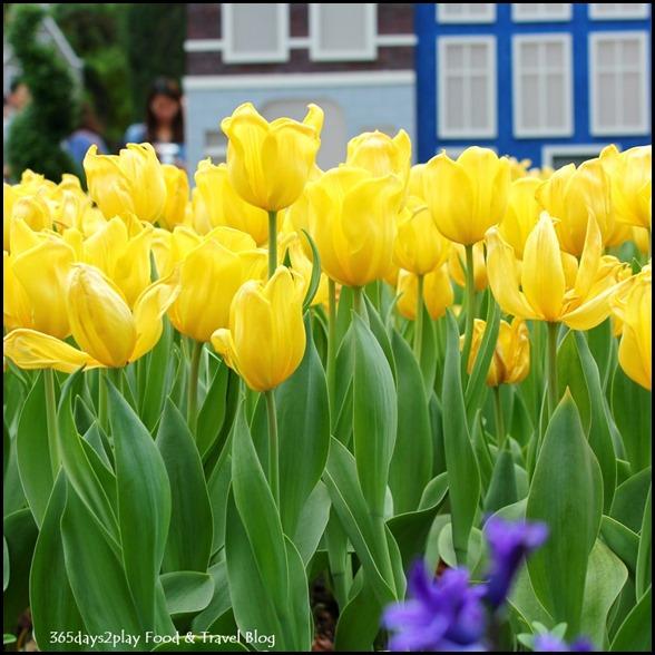 Tulip Mania 2014 (28)