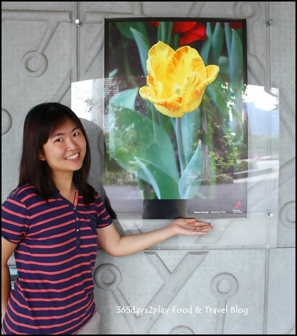 Tulip Mania 2014 (29)