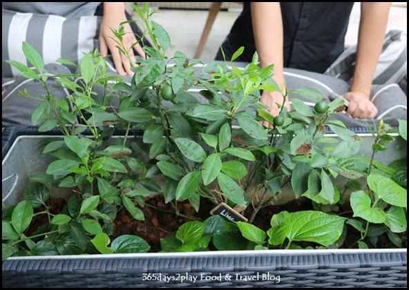 Portico Vegetable Garden (2)