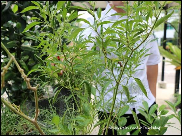 Portico Vegetable Garden (7)