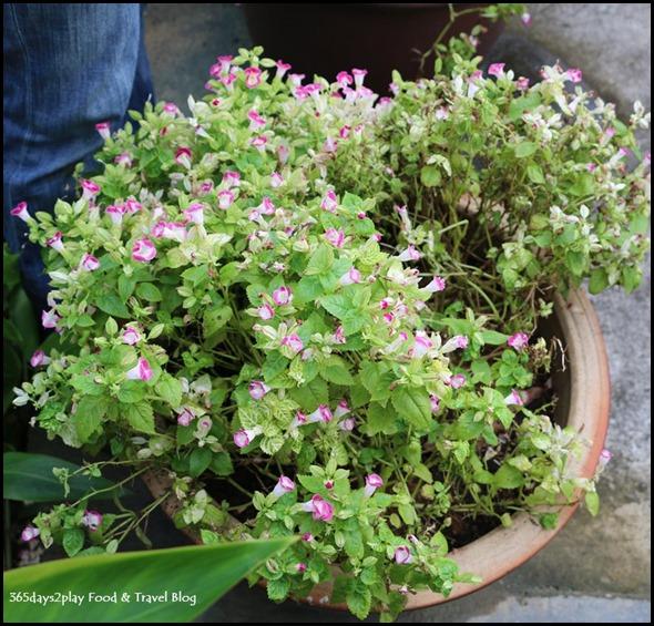 Portico Vegetable Garden (9)