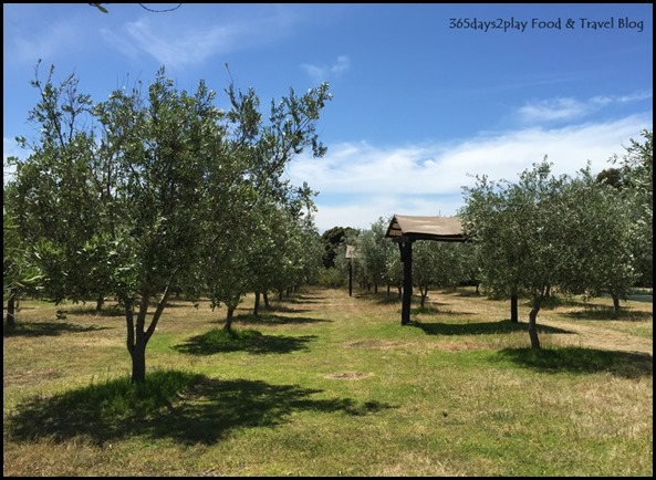 Olio Bello Olive Farm (2)