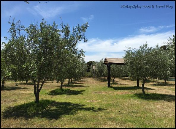 Olio Bello Olive Farm (2)