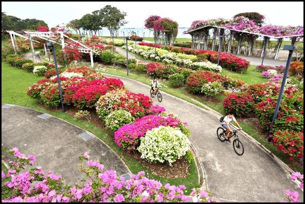 Bougainvillea Garden