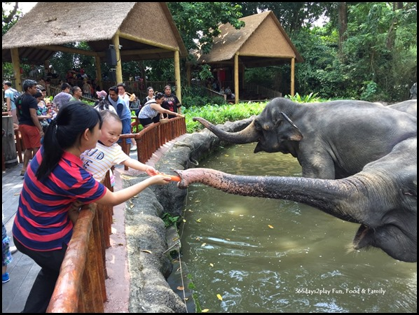 Toddler feeding elephants at the Singapore Zoo