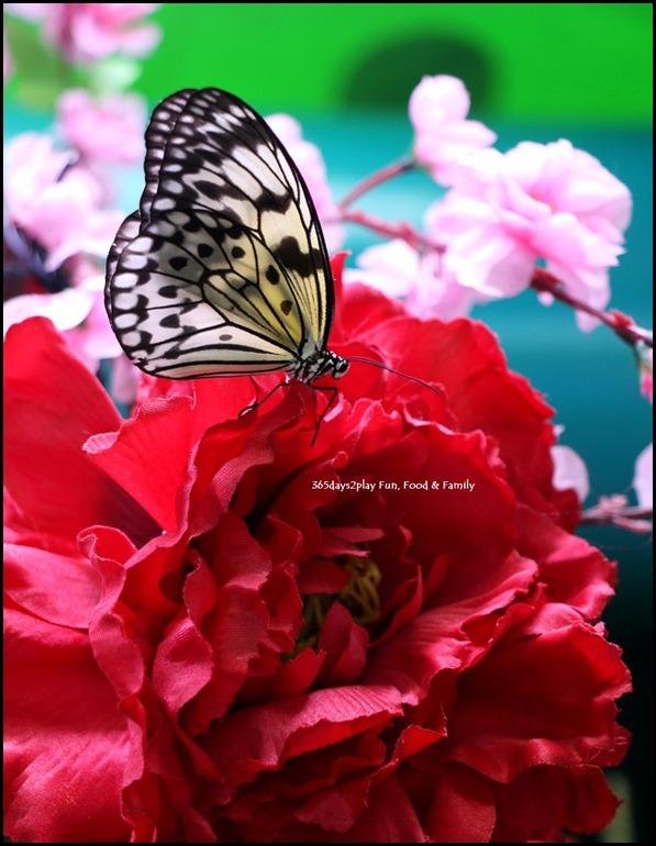 Butterfly Kingdom (15)