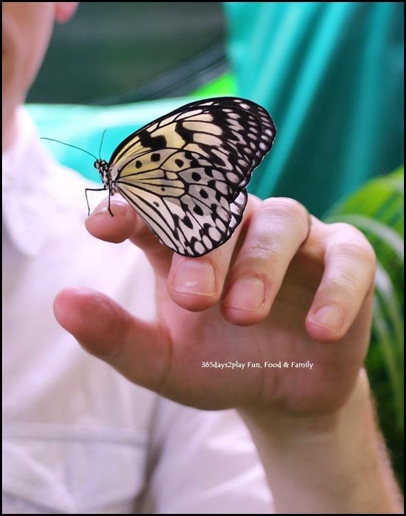 Butterfly Kingdom (1)