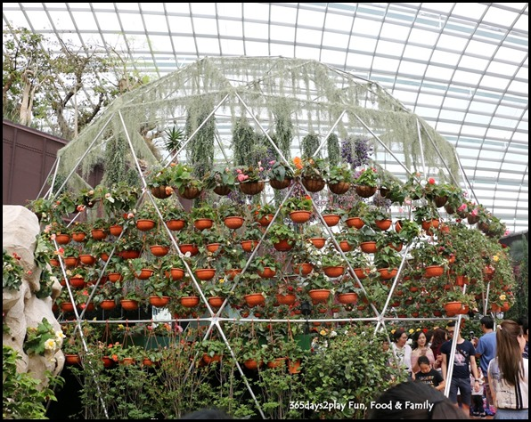 Gardens by the Bay Flower Dome - Begonia Brilliance (1)