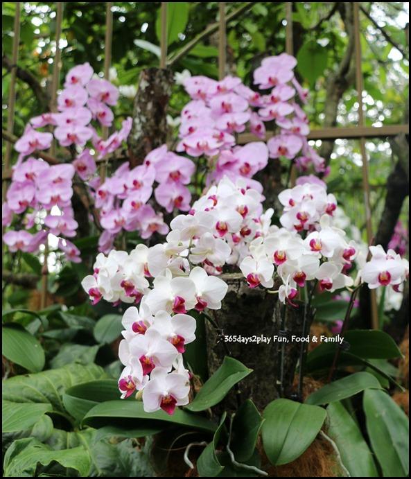 Singapore Botanic Gardens Heritage  (12)