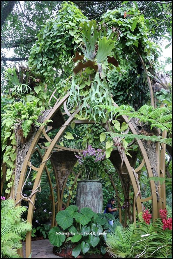 Singapore Botanic Gardens Heritage  (16)