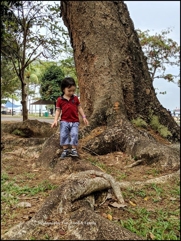 Biophilia - Playing under the big trees (3)