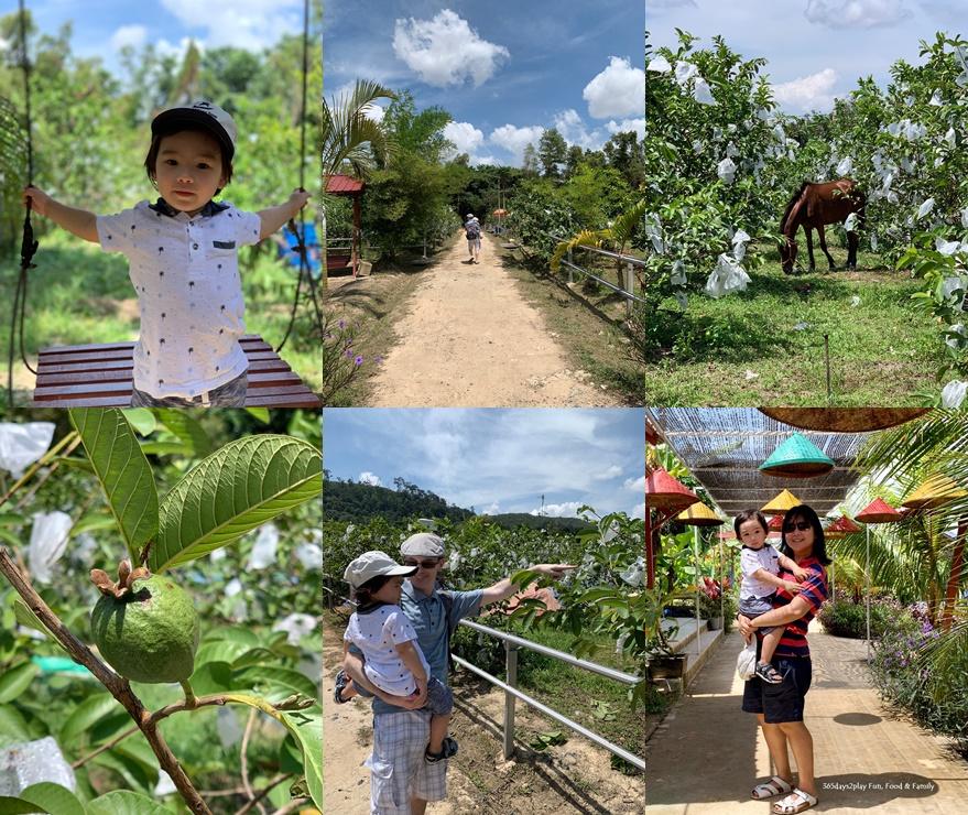 Batam Guava Farm (Jambu)
